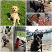 Downtown Dog Resort And Spa Baltimore Md Groupon