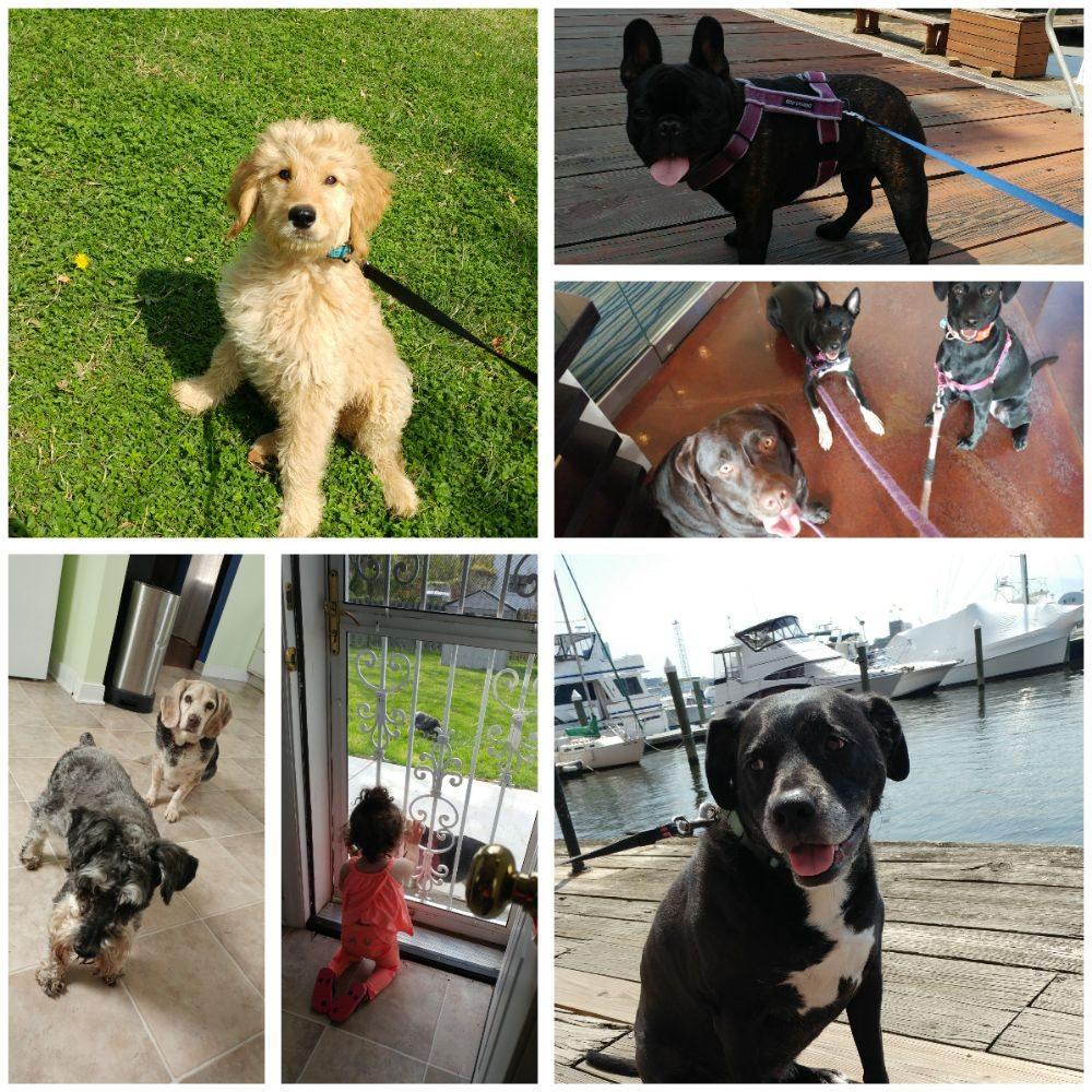 Pet Care Extraordinare: 130 S Newkirk St, Baltimore, MD