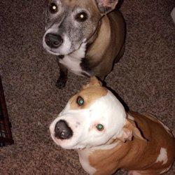 The Dog House - 57 Photos & 25 Reviews - Pet Stores - 120 Hale Rd