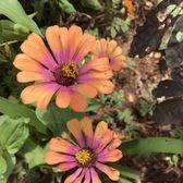 allerton garden reviews. photo of mcbryde garden \u0026 allerton - poipu, hi, united states reviews