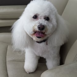 town and country dog grooming