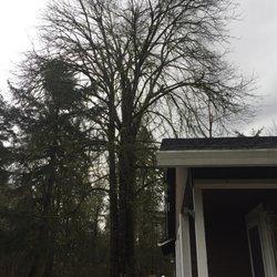 Graham Wa Weather >> Top Notch Tree Service Tree Services 14111 234th St E Graham