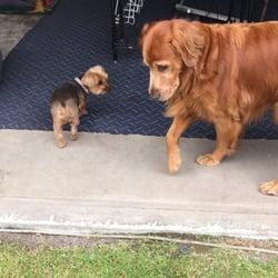 Valley Dog Boarding - CLOSED - Pet Sitting - 14320 Ventura