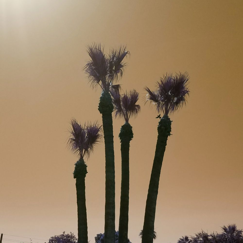 Twilight Tree & Landscape Service