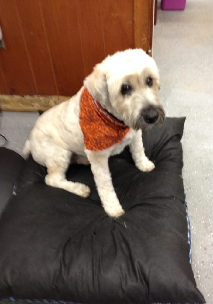 The Pet Tailor Salon and Mobile Dog Grooming: 14 Center St, Dartmouth, MA