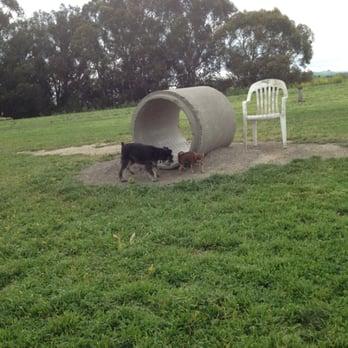 Small Dogs In Petaluma Ca
