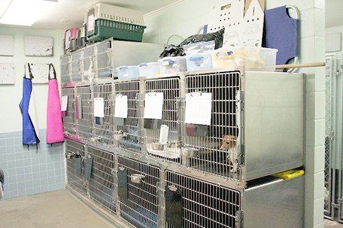 Chaparral Veterinary Center: 801 Hwy 16 S, Jourdanton, TX