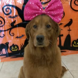 Dog Grooming In Manchester Mo