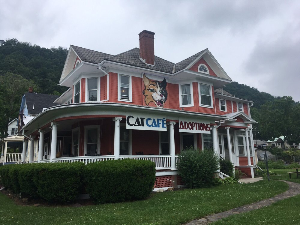 Give Purrs a Chance: 51 Independence St, Berkeley Springs, WV