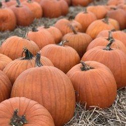 Photo Of Randyu0027s Pumpkin Patch   Lawrenceville, GA, United States. Beautiful !