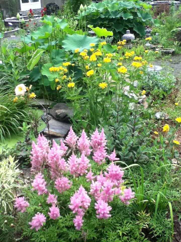 Chapley Gardens: 397 Greenfield Rd, Deerfield, MA