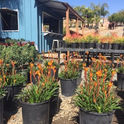 Photo Of Curby S Nursery Temecula Ca United States Spring Is Coming
