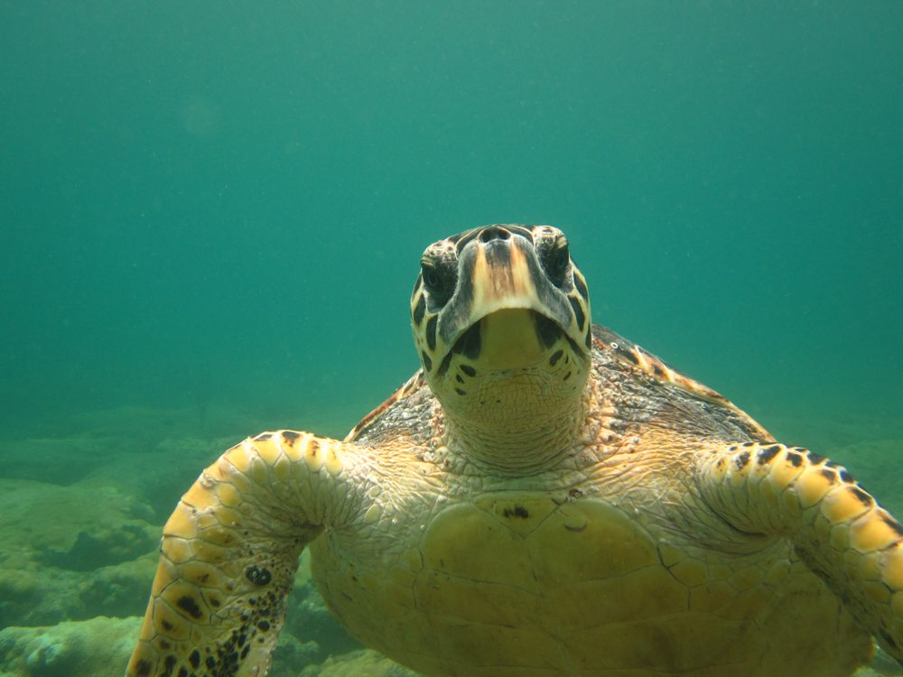 Deep Blue Divers: 4348 N Ocean Dr, Fort Lauderdale, FL