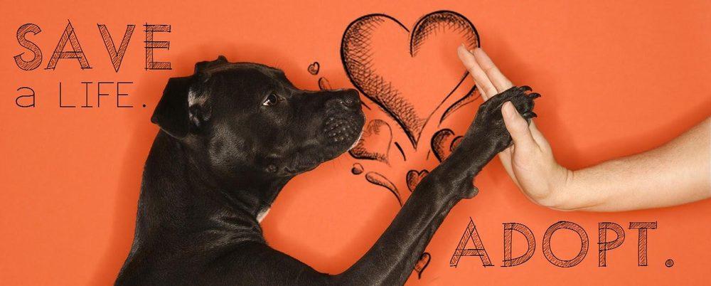 Huachuca City Animal Shelter: 300 Howard St, Huachuca City, AZ