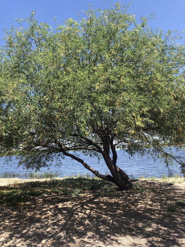 Roper Lake State Park: 101 E Roper Lake Rd, Safford, AZ