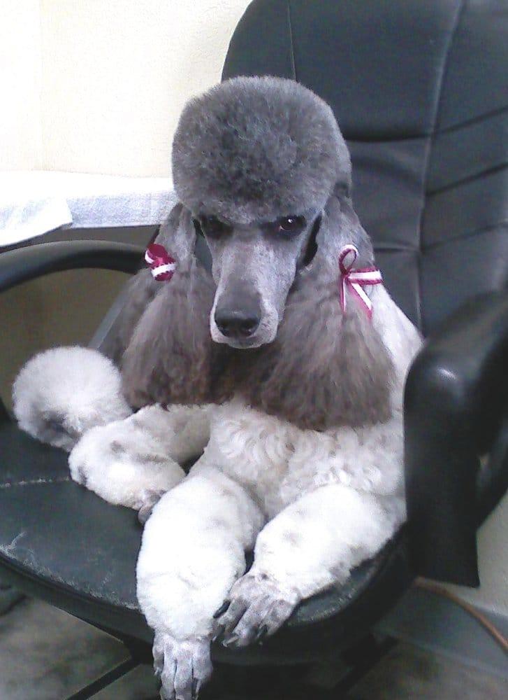 Dawnte's Pet Grooming Salon: 3837 W Douglas Ave, Wichita, KS