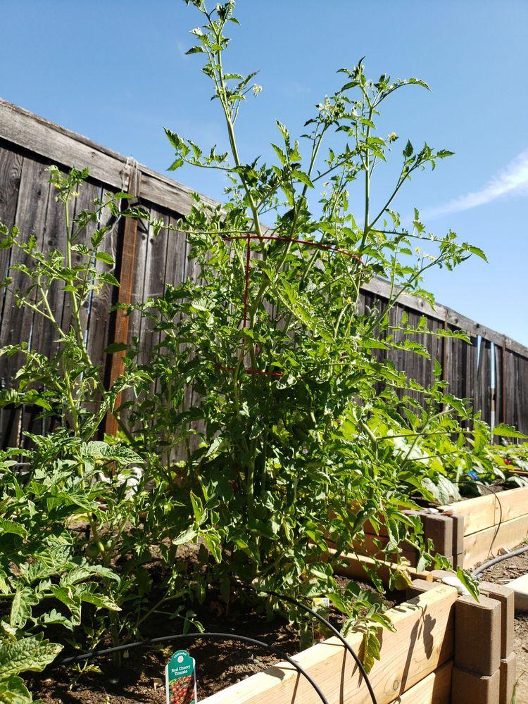 Jass Gardening: Antelope, CA