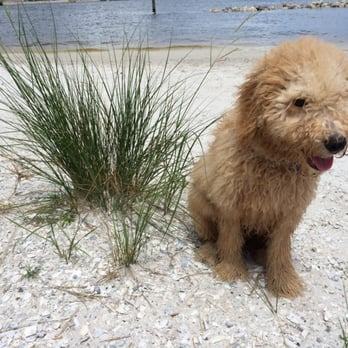 Photo Of Davis Island Dog Beach Tampa Fl United States Truman Loved