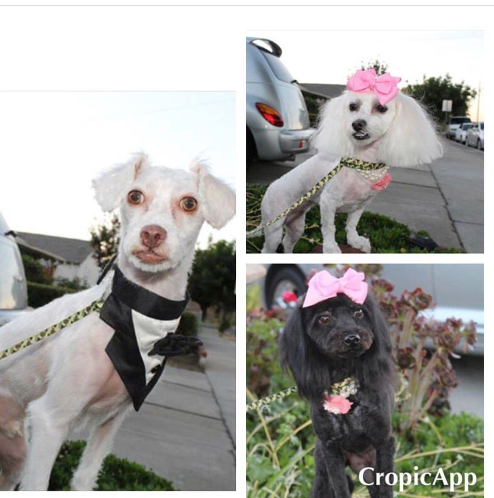 The Last Chance Pet Grooming and Dogs Trainer: Antioch, CA