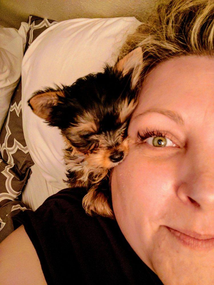 The Puppy Spot: 22 Blanding Blvd, Bellair-Meadowbrook Terrace, FL