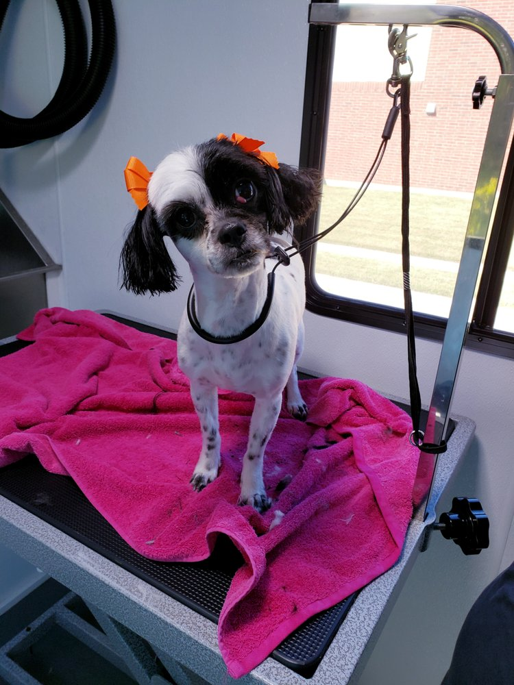 """Furever Clean """" Your Mobile Grooming Solution """": Cleburne, TX"""