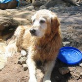 Homeward Bound Golden Retriever Rescue and Sanctuary, Inc ...