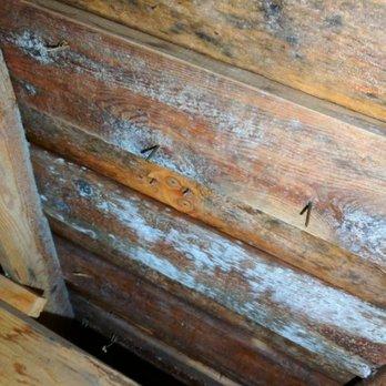 Elegant Photo Of Allways Roofing   Snohomish, WA, United States. Mildew/mold
