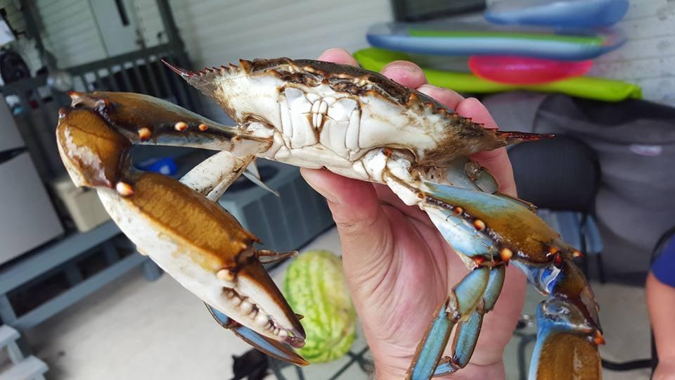 Holly Beach Seafood Market: 7262 Highway 27 S, Sulphur, LA
