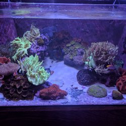 0d1dcbceee08 Amazing Aquariums   Reefs - 43 Photos   61 Reviews - Aquarium ...