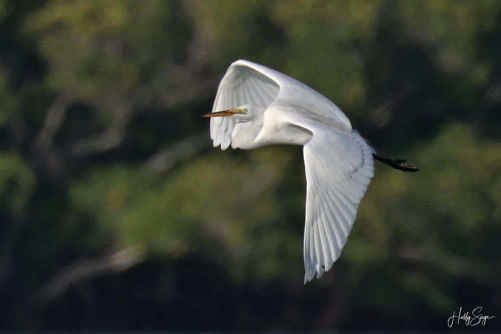 Everglades Area Tours: 238 Mamie St, Chokoloskee, FL