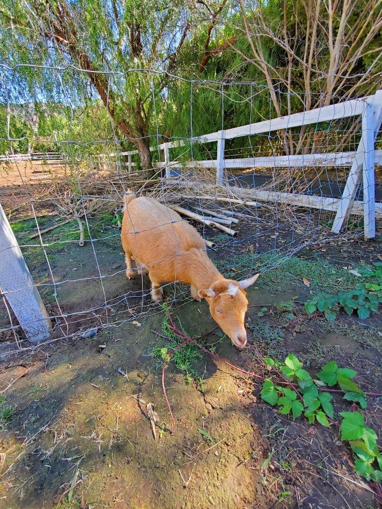 Wishing Well Mini Ranch: 29850 Margale Ln, Vista, CA