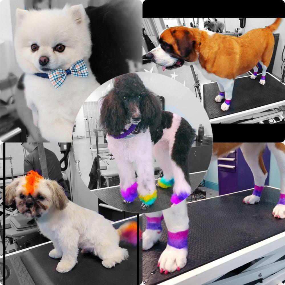 Hair Of The Dog Pet Grooming 105 Photos 106 Reviews Pet