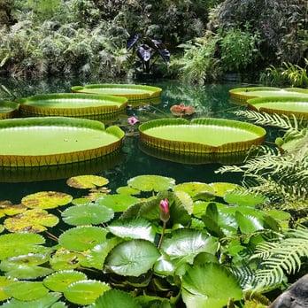 Cedar Lakes Woods and Gardens - 137 Photos & 21 Reviews - Botanical ...