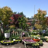 Photo Of Orchard Nursery Florist Lafayette Ca United States This