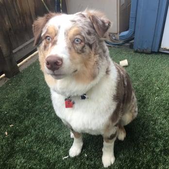 Dog Grooming Lakewood Co