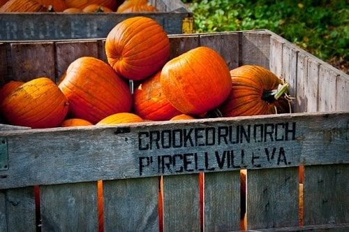Crooked Run Orchard: 37883 E Main St, Purcellville, VA