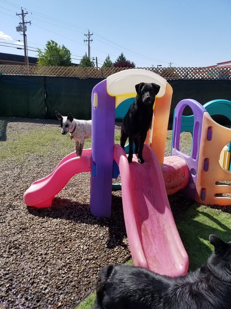 doggie days 17 photos 13 reviews pet boarding pet sitting 3309 n carson st carson city. Black Bedroom Furniture Sets. Home Design Ideas