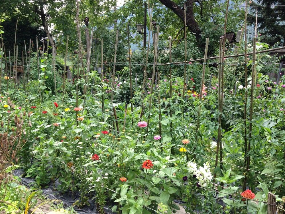 biasion fiori bolzano restaurant - photo#16