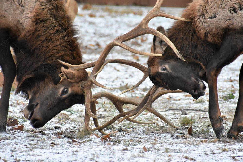 Lone Elk Park: 1 Lone Elk Park Rd, Valley Park, MO