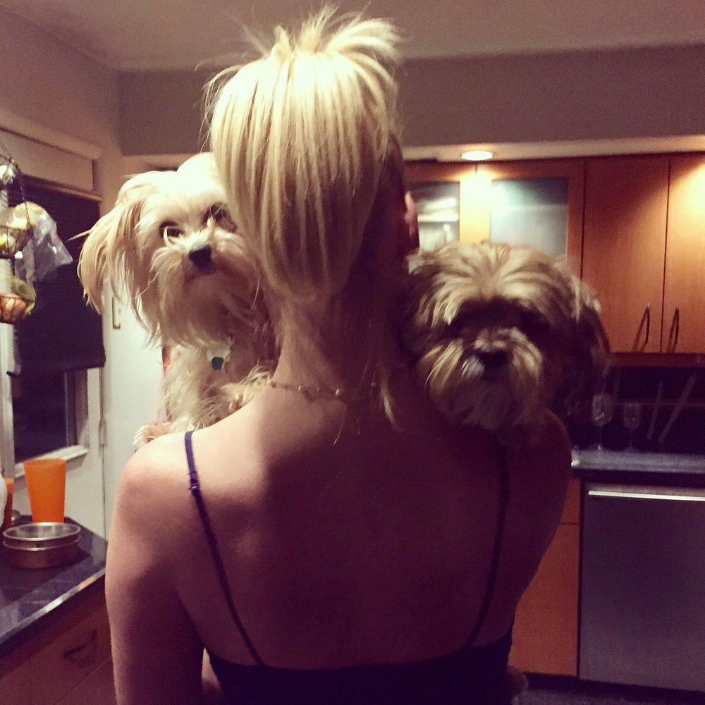 Tlc Dog Grooming Service: 3446 University Ave, Morgantown, WV