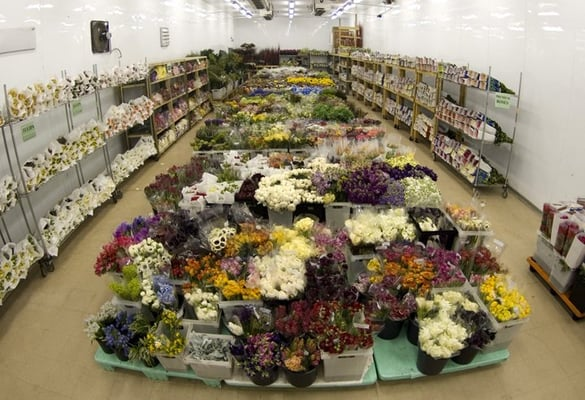 Potomac floral wholesale 2403 linden ln silver spring md florists potomac floral wholesale 2403 linden ln silver spring md florists supplies manufacturers mapquest mightylinksfo