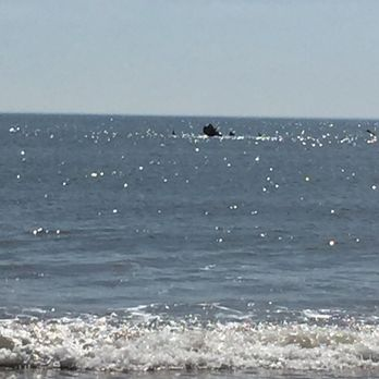 Photo Of False Cape State Park Virginia Beach Va United States Shipwreck