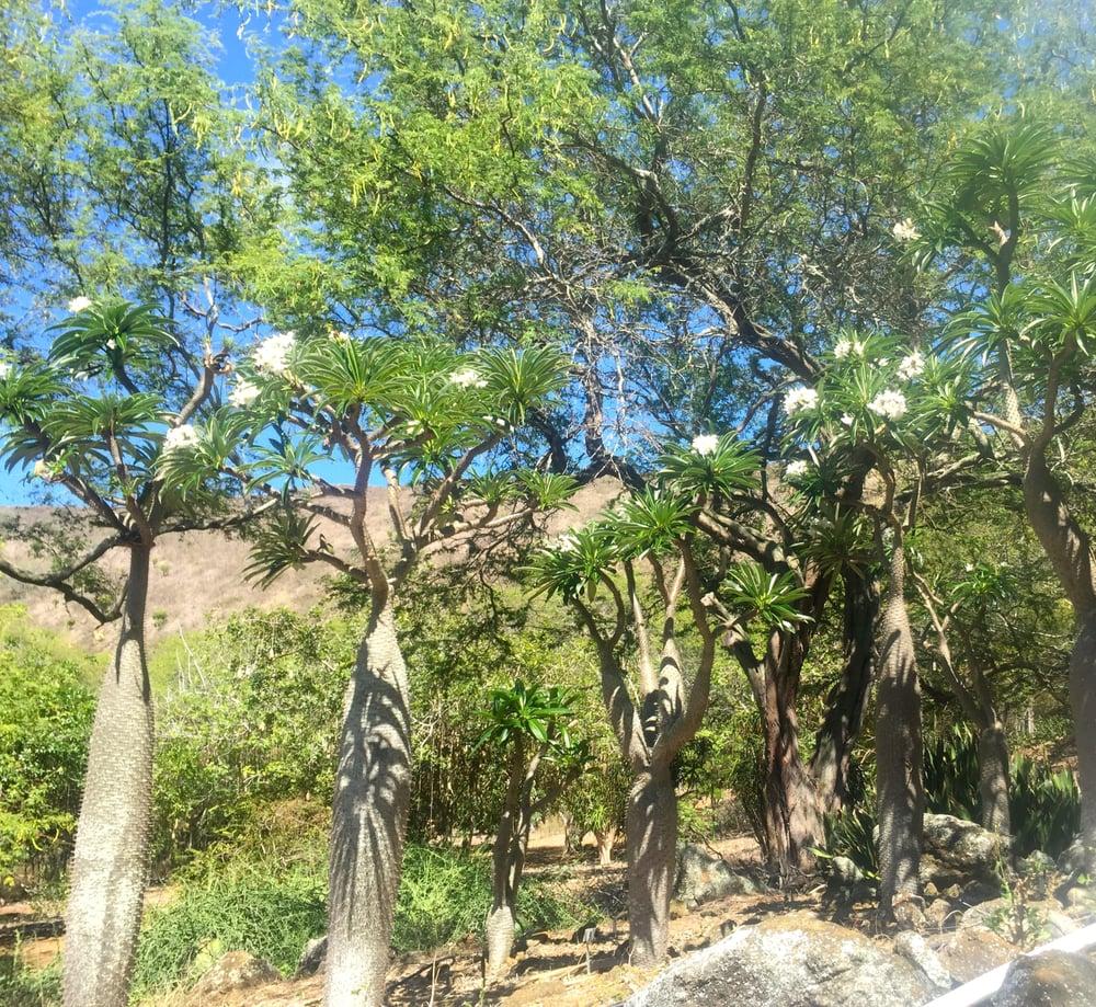 Photos For Koko Crater Botanical Garden Yelp