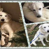 Waco Humane Society Animal Shelter Animal Shelters 2032 Circle Rd Waco Tx Phone Number