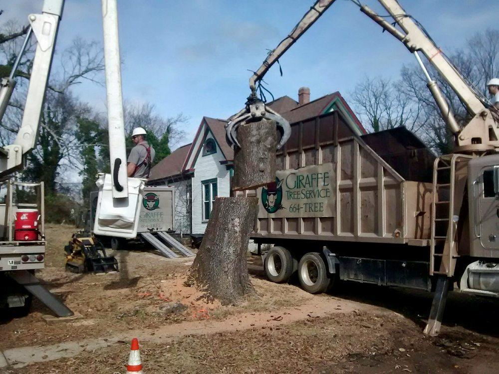 Giraffe Tree Service: Little Rock, AR