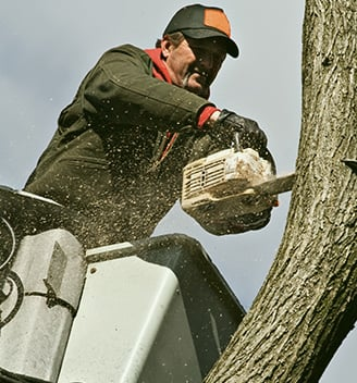 Woodchuck Tree Service: 10 Town Plz, Durango, CO