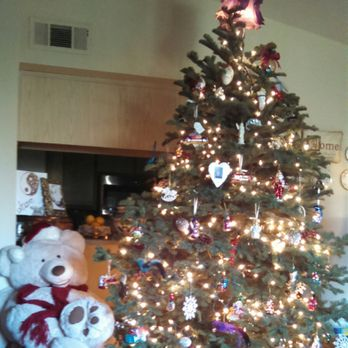 photo of crazy rudolph s christmas trees santa rosa ca united states another