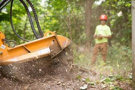 Monster Tree Service of Lynchburg: Forest, VA