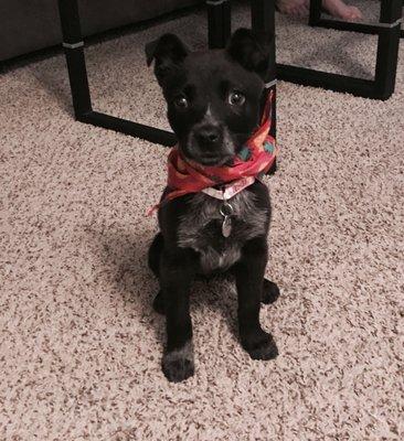 Lifeline Puppy Rescue 15171 Riverdale Rd Brighton Co Animal