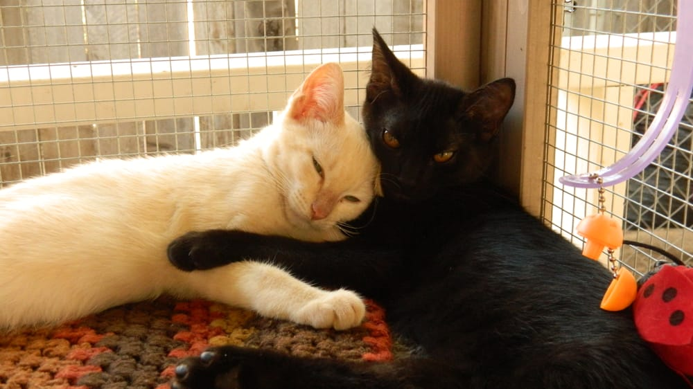 A Cat's Tale Rescue: 4001 Ingelwood Ave, Redondo Beach, CA